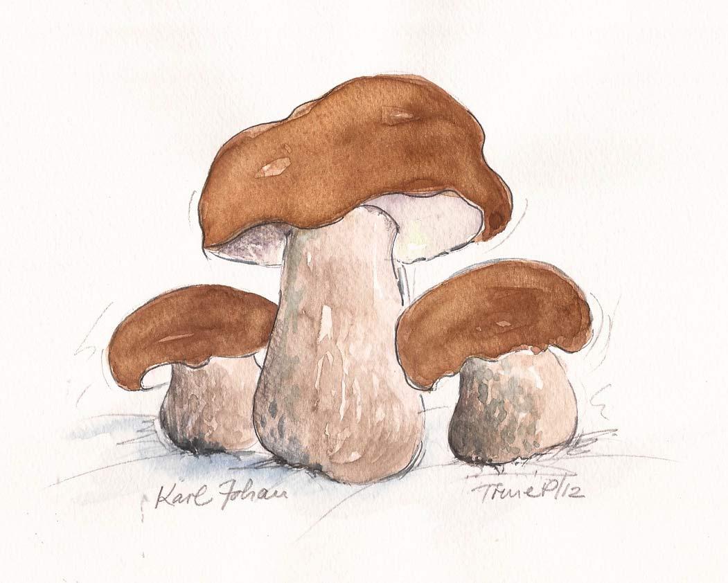 Karljohan svampe